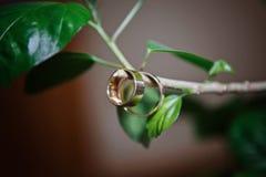 Close-up van bruid en bruidegomtrouwringen die van een takje hangen stock fotografie