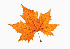 Close-up van Bruin Autumn Leaf Royalty-vrije Stock Foto's