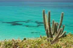 Close-up van cactussen Stock Foto's