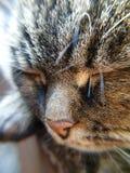 Close-up van cat& x27; s gezicht royalty-vrije stock foto's