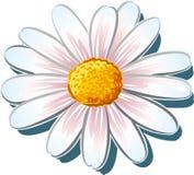 Close-up van de bloem van een madeliefje vector illustratie