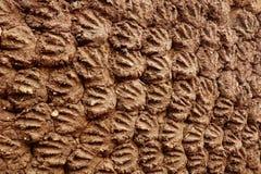 Close-up van de Brandstofpadie van de Koemest royalty-vrije stock afbeeldingen