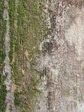 Close-up van de Details van de Muurtextuur Royalty-vrije Stock Fotografie