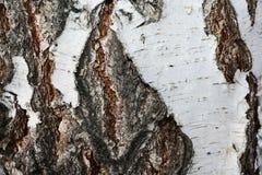 Close-up van de geweven schorsberk Royalty-vrije Stock Afbeelding