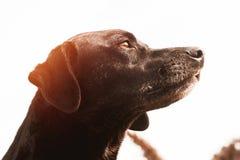 Close-up van de hond royalty-vrije stock afbeeldingen