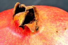 Close-up van de kelk van een granaatappel royalty-vrije stock afbeeldingen