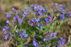 Close-up van de lente de bosbloemen stock fotografie