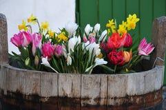 Close-up van de lentebloemen in oude houten emmer royalty-vrije stock foto's