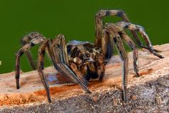 Close-up van de spin wordt geschoten die stock foto's