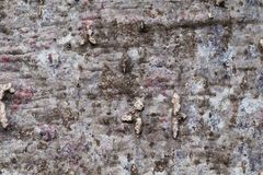 Close-up van de textuur van de Baobabboom stock foto's