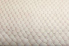 Close-up van de Vrouwelijke Bonte Koninklijke python van de Spin Stock Fotografie