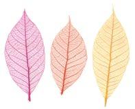 De bladeren van het skelet Royalty-vrije Stock Afbeelding