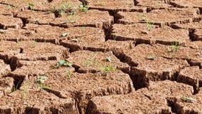 Close-up van droge gebarsten grond met ontspruitend gras stock afbeelding