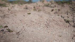 Close-up van droge grond zonder water De aard van de droogte Woestijnaard stock videobeelden