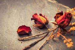 Close-up van Droge Rose Flower op Steen royalty-vrije stock afbeelding