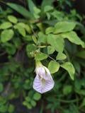 Close-up van een bloem royalty-vrije stock afbeeldingen