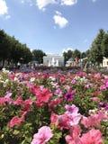 Close-up van een bloembed met roze bloemen Op de achtergrond, silhouetten van mensen die in het park in de zomer lopen stock fotografie