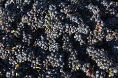 Close-up van een druivenbak Royalty-vrije Stock Afbeeldingen