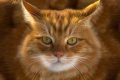 Close-up van een gemberkat vector illustratie