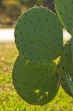 Close-up van een groene cactus met erachter kleine gele bloemen Royalty-vrije Stock Afbeelding