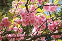 close-up van een het tot bloei komen makreelgeep Stock Foto