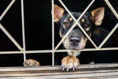 Close-up van een hondkooi Royalty-vrije Stock Foto's