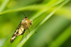Close-up van een insect stock foto