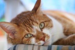 Close-up van een kat Royalty-vrije Stock Afbeeldingen
