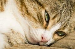 Close-up van een kattengezicht stock foto