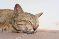 Close-up van een kattenslaap Royalty-vrije Stock Afbeeldingen