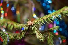 Close-up van een Kerstboomtak Achtergrond - kleurrijke boke Royalty-vrije Stock Foto