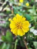 Close-up van een kleine gele bloem stock foto