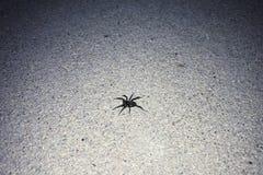 Close-up van een kleine zwarte spin op een concrete oppervlakte op een aangestoken gebied royalty-vrije stock afbeeldingen
