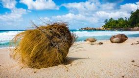 Close-up van een kokosnoot op een tropisch strand op de Seychellen, Poli stock foto's