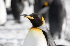 Close-up van een Koning Penguin in de Vlakte van Salisbury op Zuid-Georgië royalty-vrije stock fotografie