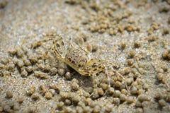 Close-up van een krab op een zandig strand in Krabi Stock Foto's