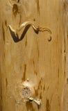 Close-up van een Logboek met Spaanders Stock Foto's