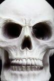 Close-up van een menselijke schedel Royalty-vrije Stock Afbeeldingen