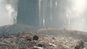 Close-up van een militair` s laars wordt geschoten die in het rokerige bos lopen dat stock videobeelden