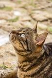 Close-up van een mooie kat die van de gestreepte katstraat, bij St Julian ` s, Malta ter plaatse liggen Stock Fotografie