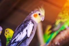 Close-up van een mooie papegaai drie royalty-vrije stock afbeelding