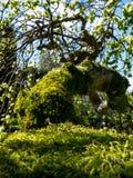 Close-up van een mos-behandelde boomtak in zonlicht Royalty-vrije Stock Afbeelding