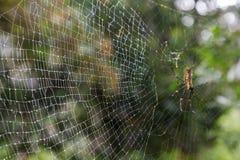 Close-up van een natte spiderweb Stock Afbeelding