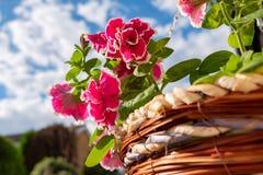 Close-up van een onlangs geplante het hangen mandregeling die de gevoelige roze bloemen tonen die in een traditionele geweven man stock foto's