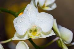 Close-up van een Orchidee - macro Royalty-vrije Stock Foto's