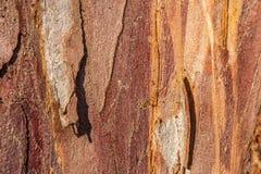 Close-up van een oude boomschors royalty-vrije stock afbeeldingen
