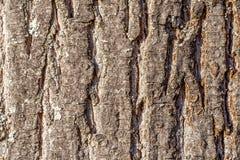 Close-up van een oude boomschors royalty-vrije stock foto