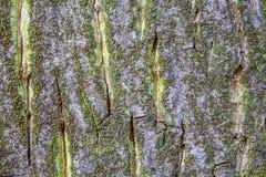 Close-up van een oude boomschors royalty-vrije stock foto's