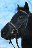 Close-up van een paard Royalty-vrije Stock Foto's