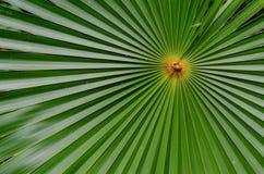 Close-up van een palmblad royalty-vrije stock afbeeldingen